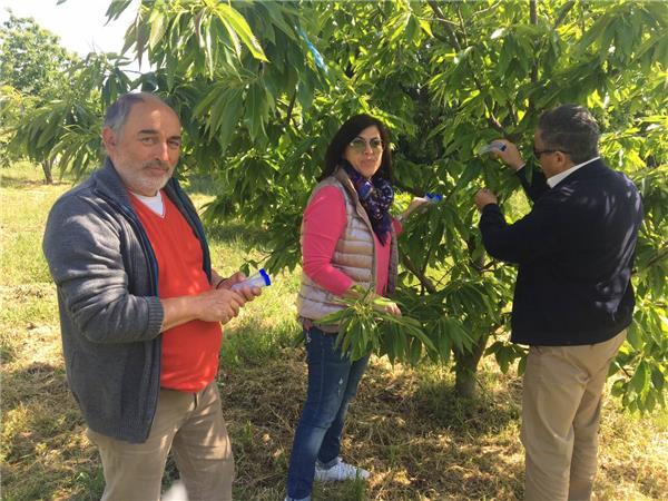 Βιολογική καταπολέμηση της σφήκας της καστανιάς με τη χρήση συγκεκριμένου παρασιτοειδούς από την Περιφέρεια Θεσσαλίας