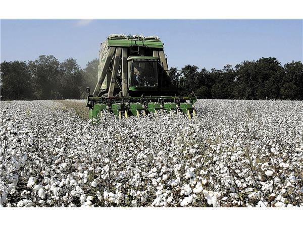 Προειδοποίηση ολοκληρωμένης φυτοπροστασίας στη βαμβακοκαλλιέργεια